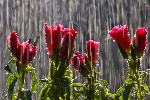 flower-in-rain-11.jpg